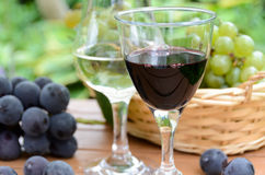 Red and white wine with grapes. Glass of red and white wine with fresh grapes in garden royalty free stock photos