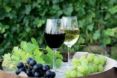 Red and white wine with grapes in nature. Glasses of red and white wine with grapes on the barrel royalty free stock image