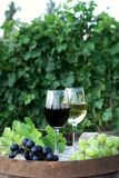 Red and white wine with grapes in nature. Glasses of red and white wine with grapes on the barrel stock photos