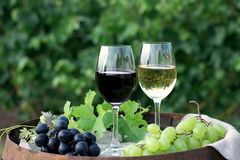 Red and white wine with grapes in nature. Glasses of red and white wine with grapes on the barrel stock image