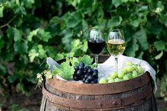 Red and white wine with grapes in nature. Glasses of red and white wine with grapes on the barrel stock images