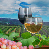 Red and white wine in a vineyard Stock Photos
