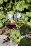 Red and white wines Stock Images