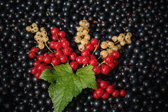 Red and white or yellow currant on the raw black currant Stock Photo
