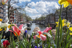 Red, white and yellow flowers on the canal in Amsterdam with boats, buildings and water as background Stock Image