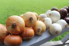 Red, white and yellow onions Stock Images