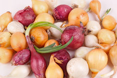 Red, white and yelow onion sets ready for planting Royalty Free Stock Image