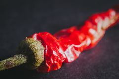 Red whole chilli peppers for borscht and soups royalty free stock photo