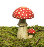 Red and whte mushroom. Red white dot mushroom isolated on white background royalty free stock photo