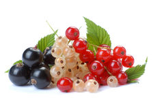 Red wihite black currant. Red currant; white currant; black currant Royalty Free Stock Images