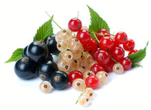 Red wihite black currant. Red currant; white currant; black currant stock photo