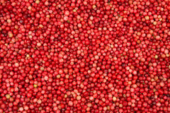 Red wild cranberries Stock Image