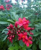 Red wild flowers royalty free stock photography