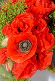 Red wild flowers of Papaver rhoeas bouquet, corn field poppy Royalty Free Stock Photos