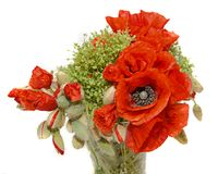 Red wild flowers of Papaver rhoeas bouquet in a transparent vase Royalty Free Stock Image