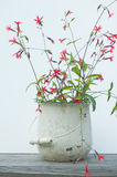 Red wild flowers in white bucket Stock Photography