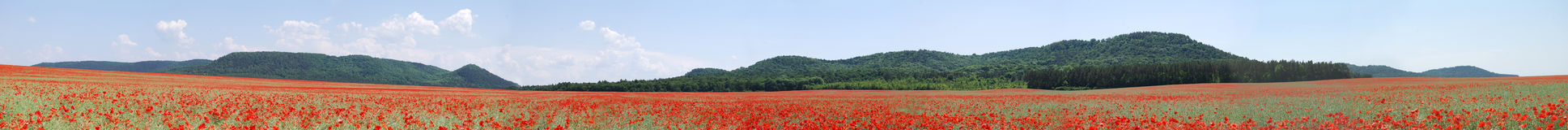 Red wild poppy panorama Royalty Free Stock Photo