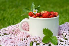 Red wild strawberries in a cup Royalty Free Stock Image