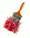 Red wildflower paintbrush Stock Photography