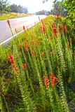 Red Wildflowers Leaning Stock Photos