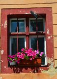 Red window with flowers royalty free stock photography