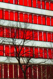 Red window skyscraper Royalty Free Stock Photo