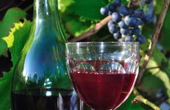 Red wine. Glass of red wine and bottle, against the background of grape and vine leaves Royalty Free Stock Images