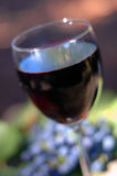 Red Wine. Extreme shallow depth of focus . Red vineyard grapes as a soft focus background element Royalty Free Stock Photo