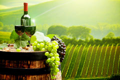 Red wine with barrel on vineyard in green Tuscany, Stock Images