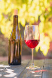 Red wine. And bottle  in a garden in autumn Royalty Free Stock Photography