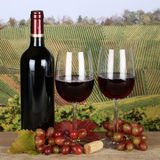 Red wine in a bottle and glass in the vineyards. Red wine in a bottle and in wine glasses in the vineyards in autumn Royalty Free Stock Photography