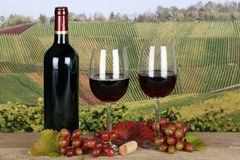Red wine in bottle in the vineyards in autumn. Red wine in a bottle in the vineyards in autumn Stock Photo