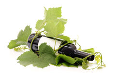 Red wine bottle wrapped in wine grape vine Royalty Free Stock Images