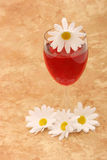 Red wine and daisies royalty free stock images