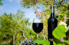 Red wine in the garden Royalty Free Stock Photos