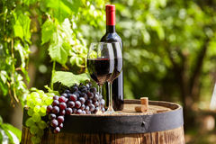 Red wine on garden terrace Royalty Free Stock Image