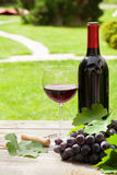 Red wine glass and bottle with bunch of grapes Royalty Free Stock Image
