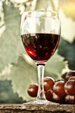 Red wine glass and bunch of grapes Stock Photo