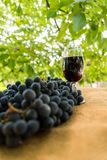 Red wine glass and bunch of grapes against blurred green natural background Royalty Free Stock Photography
