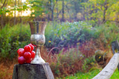 Red wine glass and bunch of grapes on wooden table Royalty Free Stock Image