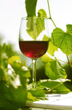 Red wine glass in the garden Stock Photo