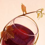 Red Wine in Glass with Grape Leaves Royalty Free Stock Images