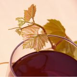 Red Wine in Glass with Grape Leaves Royalty Free Stock Photo