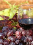 Red wine goblet and bunch of red grapes Stock Images