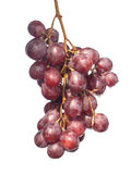 Red wine Grape branch hang isolated on white Stock Photo