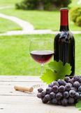 Red wine and grape. Red wine glass and bottle with bunch of grapes in sunny garden. With copy space Stock Image