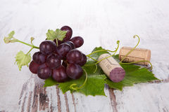 Red wine grape still life. Royalty Free Stock Image