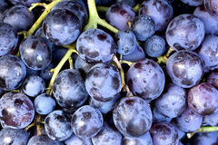 Red wine grapes background royalty free stock photo