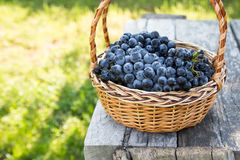 Red wine grapes. dark grapes, blue grapes, wine grapes in a bask Royalty Free Stock Photography