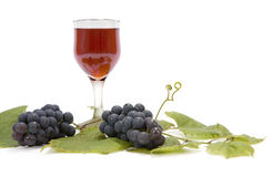 Red wine and grapes on leaf. Wineglass with ripe grapes and leaf of Common Grape Vine (Vitis vinifera) isolated on white. Clipping path incl Royalty Free Stock Photos